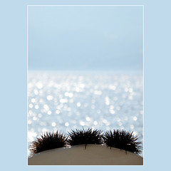 sea urchins... (Skopelos ) Tags: sea summer mer greek mar marine meer mare estate bokeh sommer sealife explore greece zomer verano vero  t fp frontpage  skopelos seaurchin marinelife oursin   sporades   aegeansea  seeigel   photographia explorecalendar explored   zeegel overzees   photographia cafeelite photographiaquality pilluelodemar  discolodimare diabretedemar photographiaqualitygroup skopelosnet