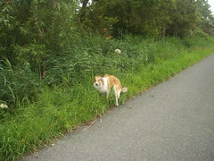 Radtour3 (manopet) Tags: dog collie hund mano meldorf torja