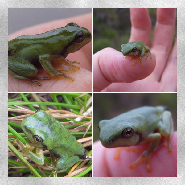 大-小青蛙