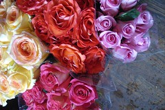Citarella Vibrant Roses (such pretty things) Tags: pink flowers blue roses ny newyork flower rose market gourmet bunch buds bouquet easthampton citarella