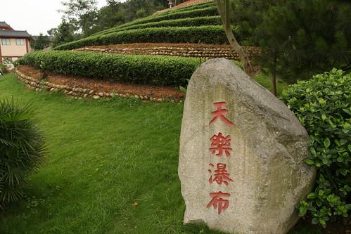 Tea bushes in the Tea Garden
