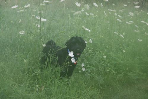 skippy takes a break from chasing rabbits