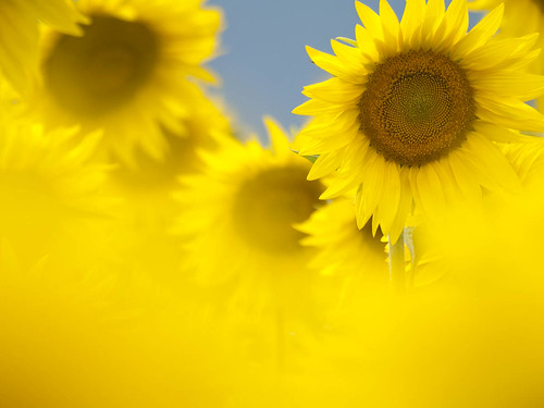 sunny ♪