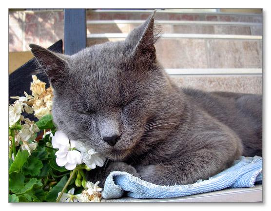 Sleeping on a flower