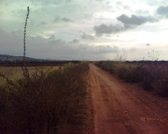 Triffa  (Jamal Elkhalladi) Tags: nature morocco maroc agriculture milli  hassi   berkane   triffa