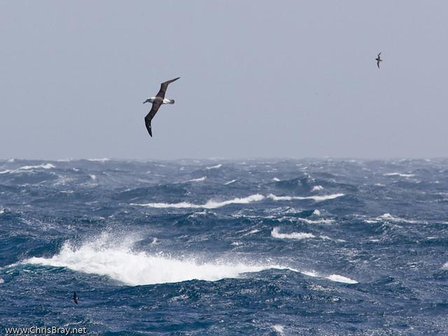 Southern Ocean Storm