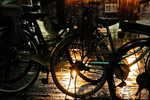 光的表情00196雨中即景_MG_8275.jpg