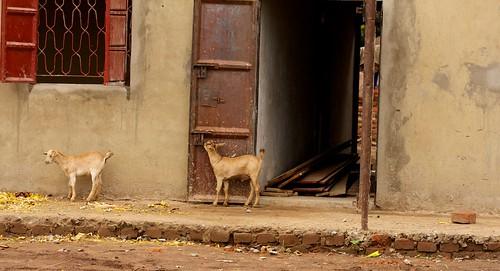 Uganda Backpack 2011  290