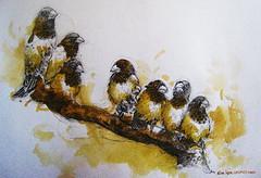 Birds 0394 Watercolor-Sketch (sia.yekchung ) Tags: art birds watercolor painting sketch drawing seven sia