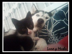 Luna y Mushu (aunqtunolosepas♥) Tags: dog pet cats baby pets cute love dogs animal animals cat bed kitten feline husky couple bea little pareja amor adorable kitty kittens huskies cutie luna perro tuxedo gato cachorro kitties gata felinos felino bebe felines animales cachorros lovely cuteness cama gatitos mascota mascotas par gatita gatito perrita perra mushu aunqtunolosepas