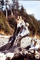 1969-03 Driftwood tree at Short Sands Beach, Oswald West State Park, OR 042 (bsnenninger) Tags: ocean 1969 beach pacific or driftwood oswaldweststatepark stateparks shortsandsbeach orstateparks
