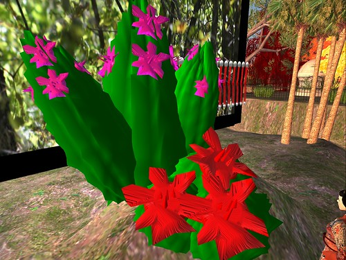Virtual Succulents