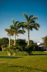 Palmy Mexico (Dmitry Chastikov) Tags: travel winter sky tree landscape mexico pentax palm tamron фото k20d tamron18250 дмитрийчастиков