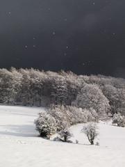snow&sun (nikjanssen) Tags: winter snow nature landscape belgium ardennes solwaster naturewachtcher