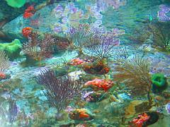 P2090319f (Tina A Thompson) Tags: california fish longbeach marinebiology aquariums marinelife aquariumofthepacific aquaticlife oceanlife longbeachattractions
