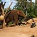 Taronga Zoo_1