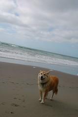 Beach Bunny Jazzmo (John 3000) Tags: ocean sf sanfrancisco california ca sky beach dogs clouds mar playa cielo nubes perros fortfunston jazzmo flickrlovers