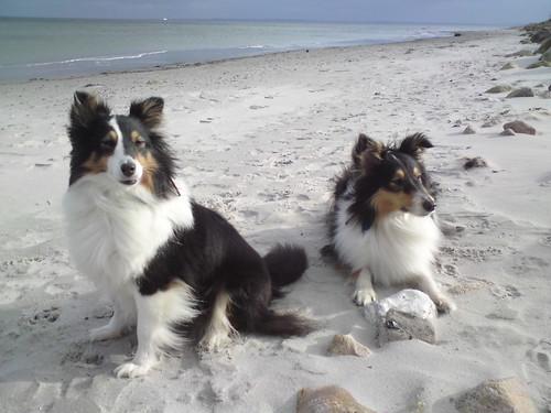 Tiffy und Islay am Strand bei Damp