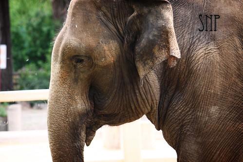 . elephant .