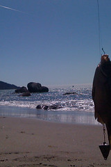 caught by a Chinese-only speaking fisherman (solprovider) Tags: sanfrancisco fish bakerbeach