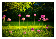 (Anders Mohlin) Tags: sverige gnesta srmland lillasigtuna