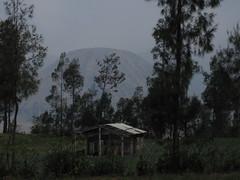 Bromo 03 - Gunung Batok (Ben Beiske) Tags: trees house misty fog indonesia volcano java foggy bamboo gunung bromo batok cemoro lawang