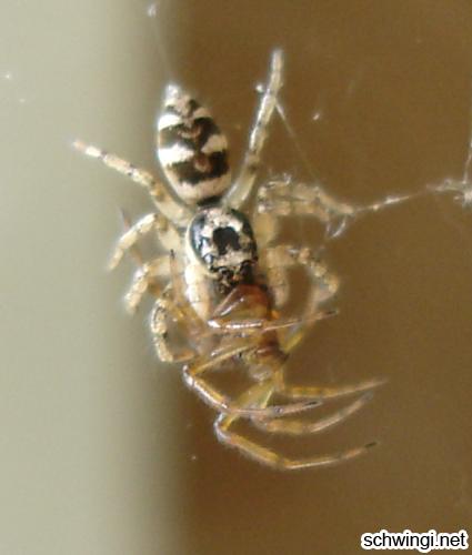 spider_vs_spider