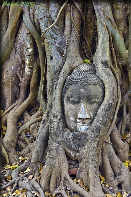 Buddha's Head..... Ayutthaya,Thailand