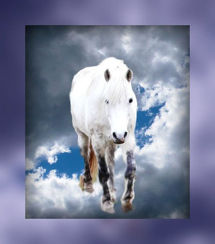 horse and sky