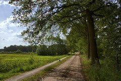 On the (dirt) road again (* Fred T *) Tags: road holland netherlands landscape spring sand sandy nederland sunny dirt fred dirtroad lente backroad weg landschap zand gelderland zonnig lichtenvoorde zandweg weggetje fredt madfred