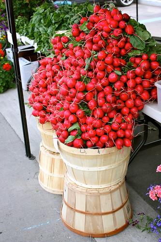 ontario-radishes