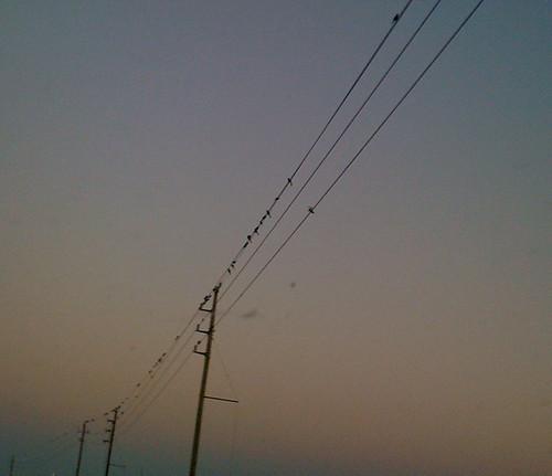 Bird meeting