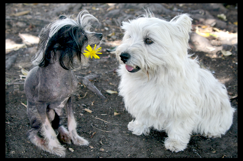 Culver City Top Pet Photographer Romeo From Hotel For Dogs Fusaro