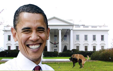 Exclusive: Obama's self portrait in front of the white house