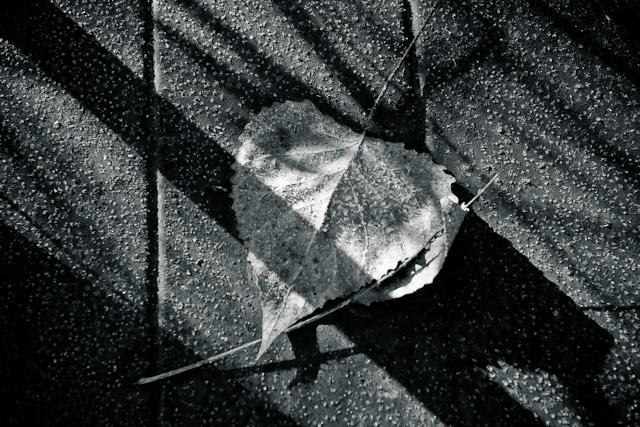 20090125-_MG_9978