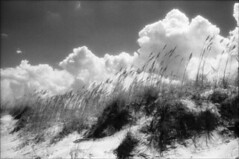 Dunes (Jamie Powell Sheppard) Tags: blackandwhite bw art film beach clouds ir photo florida fineart canonae1program staugustine sanddunes 50mmlens 35mmslr femalephotographer hc110dilb 29darkredfilter kodakhiebwinfrared