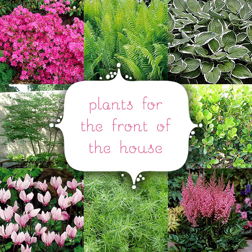 plants for the front of the house  making it lovely, Natural flower