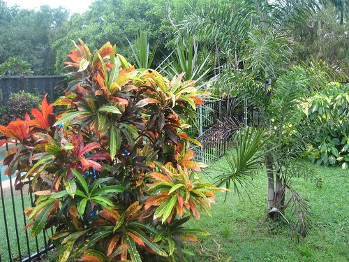 Garden at Nakara