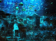 The waters of oblivion / Las aguas del olvido (Claudio.Ar) Tags: light color luz water cemetery photomanipulation agua underwater cross sony peces cementerio surreal cruz forgotten sensational topf125 fishes dsc olvido oblivion tistheseason twop h9 stb olvidado firstquality cruzadas fineartphotos innamoramento subacuatico anawesomeshot visiongroup artandphotography diamondclassphotographer flickrdiamond excellentphotographerawards theunforgettablepictures newacademy overtheexcellence goldsealofquality betterthangood proudshopper theperfectphotographer world100f multimegashot magicdonkeysbest photoexel obq earthmarvels50earthfaves atqueartificia vision100 alwaysexc claudioar claudiomufarrege goldenart phvalue artofimages novavitanewlife sensationalphoto artistictreasurechest graphicmaster imagesforthelittleprince miasbest musicsbest dragonsdanger dedicationtosascharuebinsashi daarklands oracosm magicunicornverybest