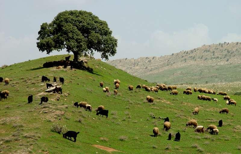 كردستان الأحتلال الأمريكي!!!! 3369355398_949036d4a