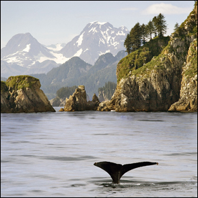 Cape Aialik, Alaska, Photograph by Robert Hitchman, All Rights Reserved