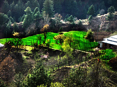 Spring is starting in Bagh, Azad Kashmir. (Tanwir Jogi) Tags: bagh azadkashmir