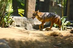 Avilon-7674 (a_doogie) Tags: zoo floraandfauna avilonzoo