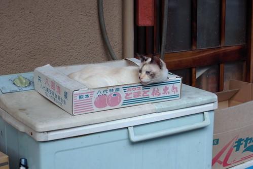 Today's Cat@20090711