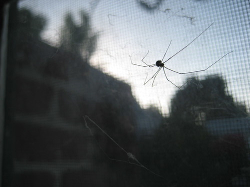 window spider