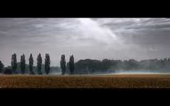 calm after the storm ((:Andrzej:)) Tags: trees summer cats field fog landscape pole hdr mga burza lato zboe drzewa zielonagra krajobraz lubuskie platinumphoto poburzy bestofrebelxti photographymypassion magicunicornverybest magicunicornmasterpiece sailsevenseasmaster spokjpoburzy