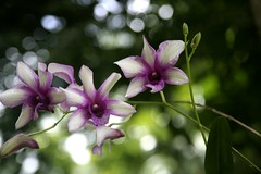 Tropical Bokeh (! .  Angela Lobefaro . !) Tags: ocean flowers vacation holiday orchid flower green beach nature leaves forest thailand interestingness sand firefox rainforest asia bokeh quality patterns gimp blumen explore cielo thai nubes tropical fiori frontpage ubuntu idyllic italians kohchang isola kochang foresta orchidea trat hff kubuntu 870 holidaytrip explored i500 allrightsreserved natuzzi mywinners abigfave aplusphoto holidaysvacanzeurlaub angiereal angelamlobefaro riproduzioneriservata
