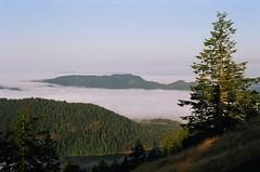 above the clouds (ozmafan) Tags: morning trees summer clouds orcasisland sanjuanislands mtconstitution moranstatepark