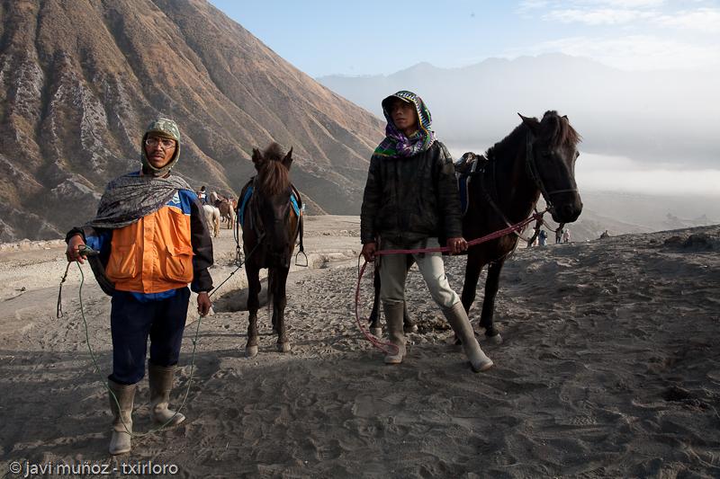 Los caballos y sus guías locales
