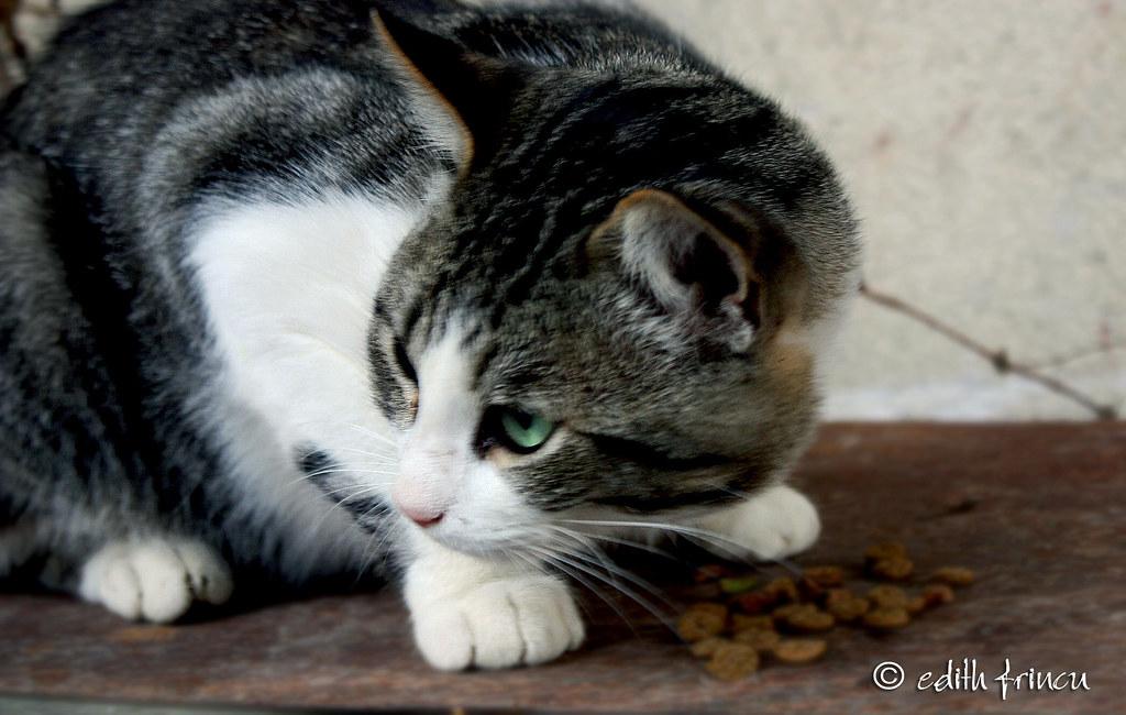 cat... eating